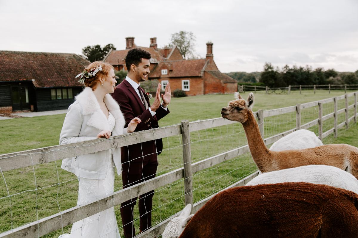 Coltsfoot wedding venue with alpacas