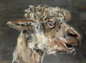 teeth, alpaca art, alpaca painting, brown alpaca ACEO print, llama art
