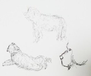 Newfoundland dogs quick sketches, dog drawings