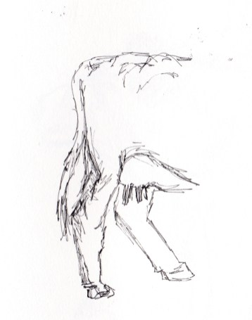 British White cattle, cow drawings, cattle sketches, cattle studies, Caroline Skinner Art