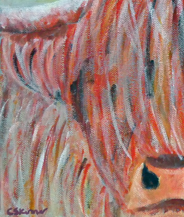 Close up view of highland cow image