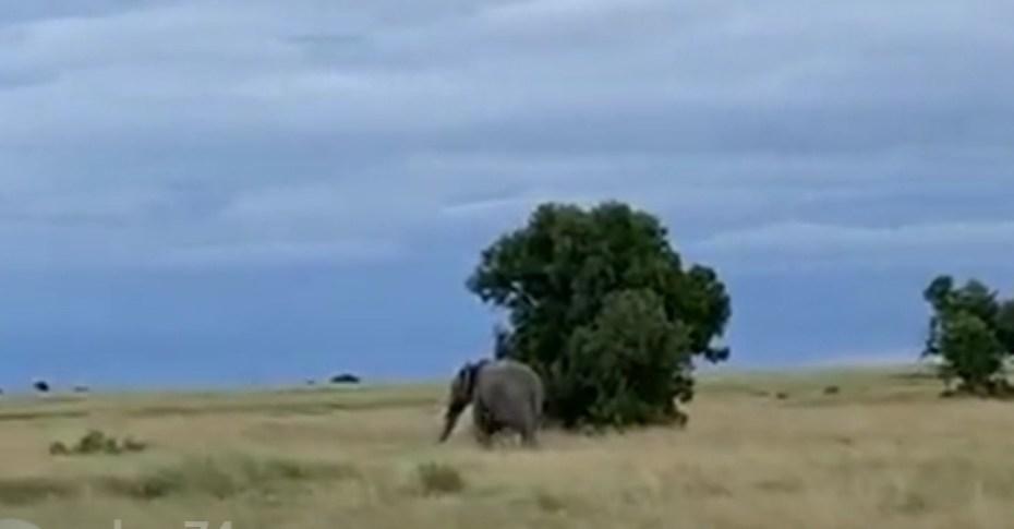 Oll Pejeta Kenyan Sofa Safari