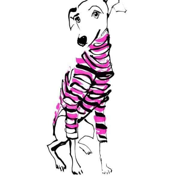 Italian Greyhound - Winter Style