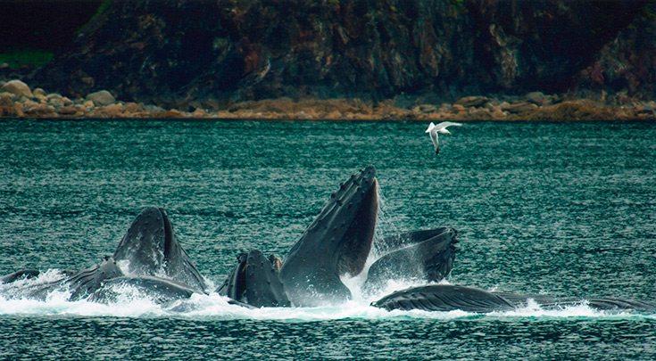 Whales in British Columbia in Desolation Sound