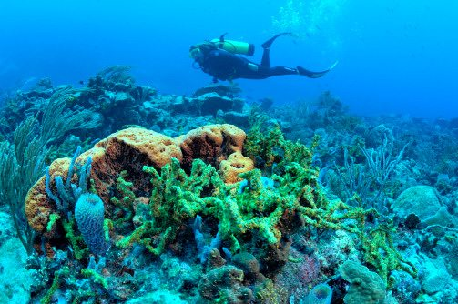 Scuba diving in St. Vincent coral reef Windward Islands