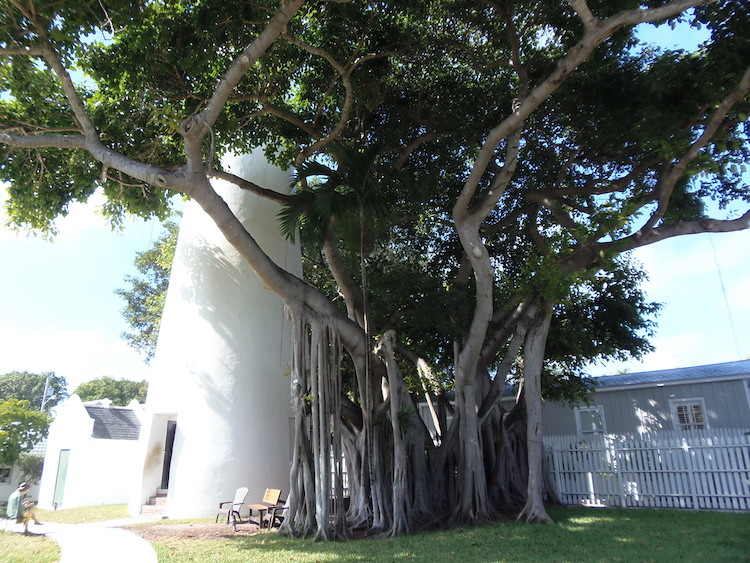 Key West's famous lighthouse and banyan tree in Florida