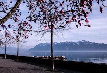 Lac Leman, Lausanne in spring