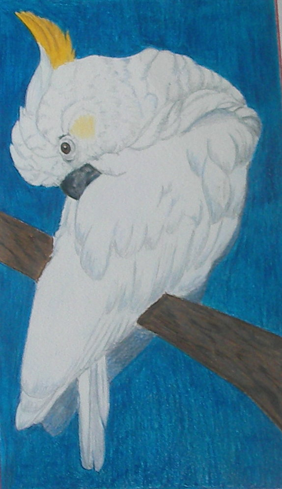 bird-cp1