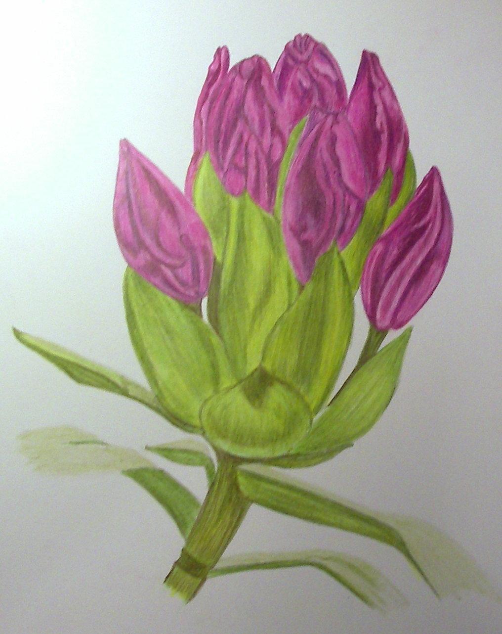 vsd-april-color