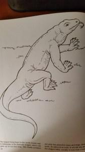 dragon drawing Komodo Dragon (real)