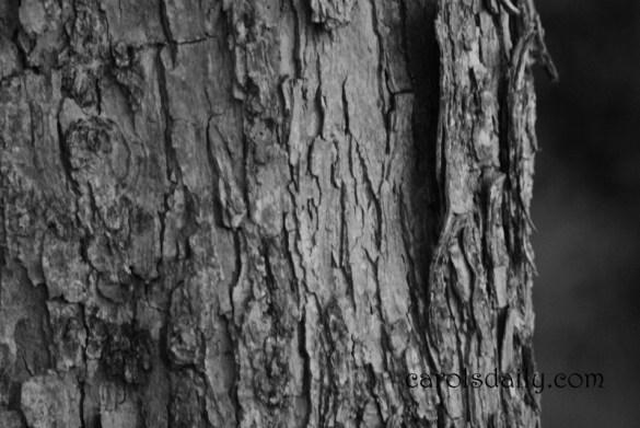 Tree Trunk