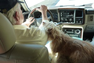 Jack was a dog lover. Kirby was his driving buddy, sitting on the armrest next to Jack, watching him intently, resting his chin on Jack's arm.