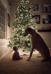 christmas-dog-and-baby