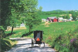 Amish Buggy near Berlin, Ohio