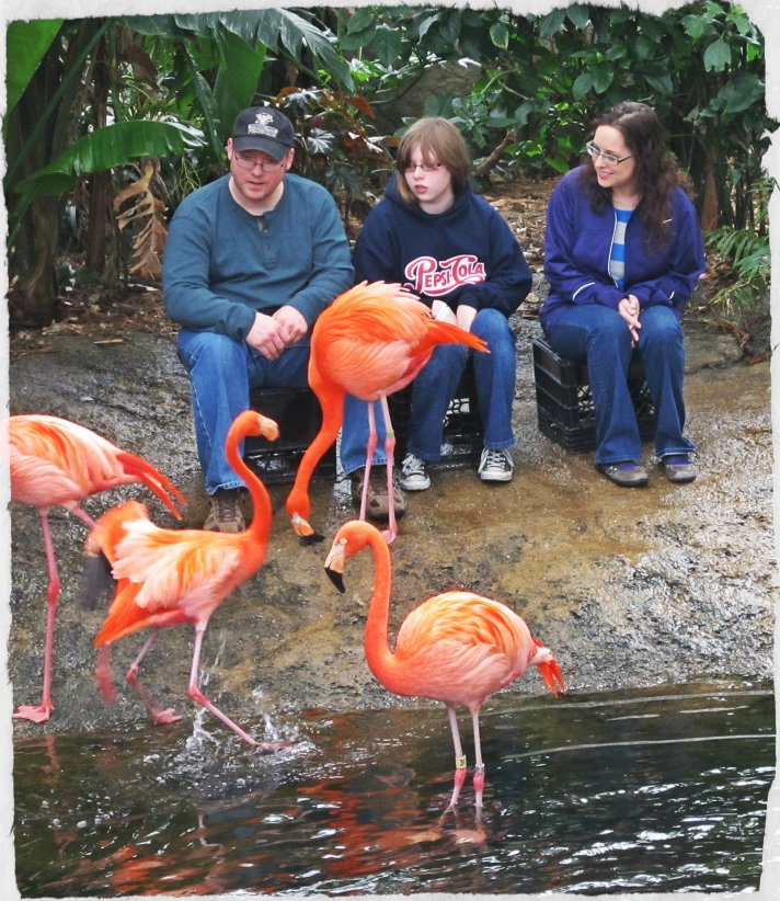 With Flamingoes