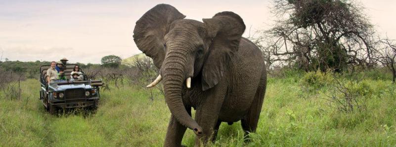 304-south-africa-safari-kwazulu-natal