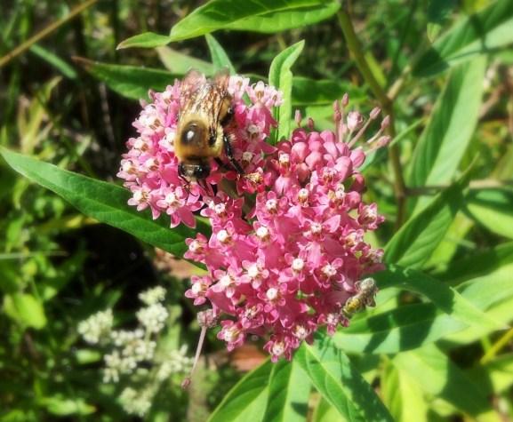 bumblee bee