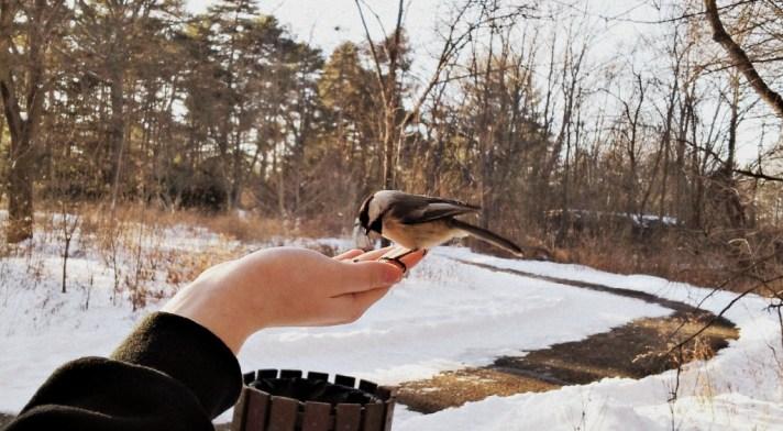 birds1a