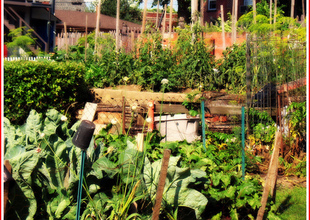 Permaculture And The Myth Of Scarcity, By Charles Eisenstein