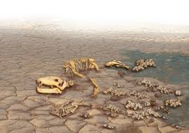 Are Humans Going Extinct? By Dahr Jamail
