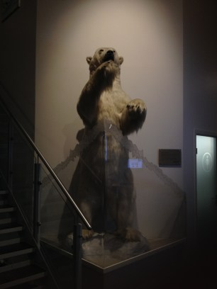 The Radisson bear