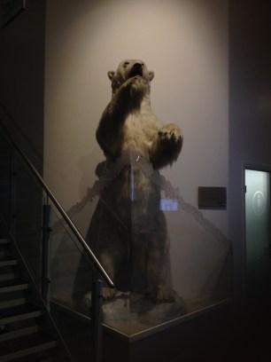 The Radisson bear
