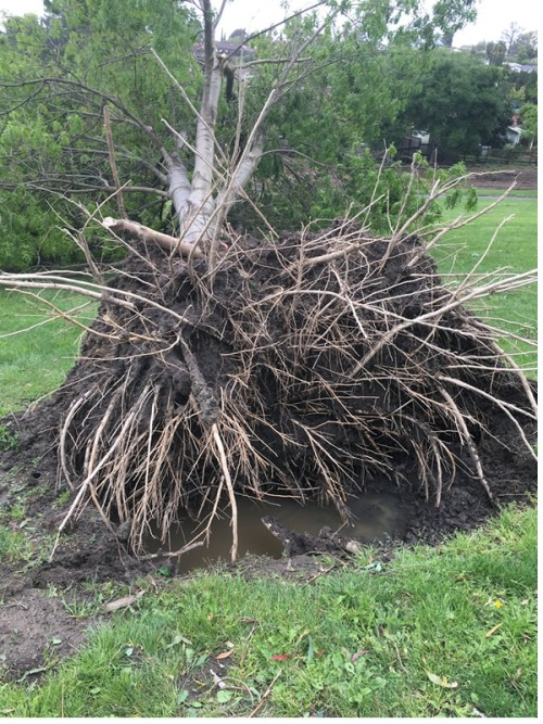 uprooted-600.jpg