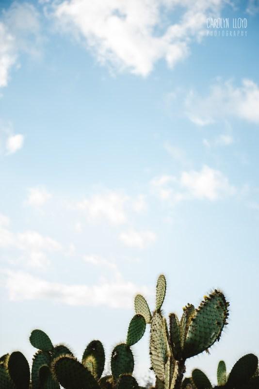 CLP_cactus