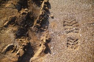 CLP_tracks