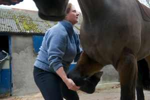 equine osteopathy 048