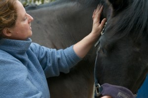 equine osteopathy 074