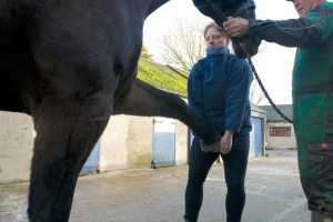 equine osteopathy 097