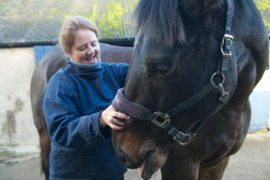 equine osteopathy 107