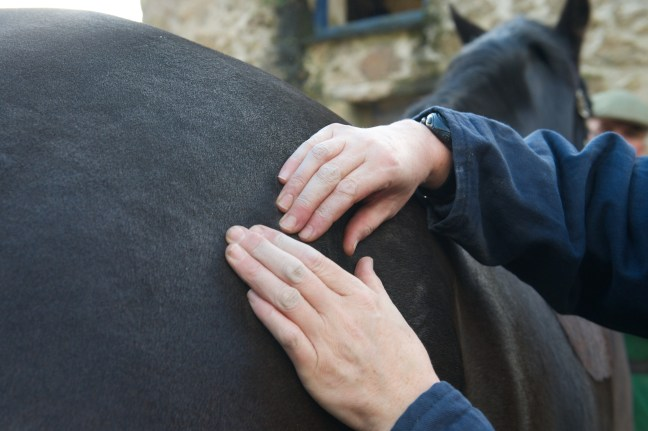 equine osteopathy 129