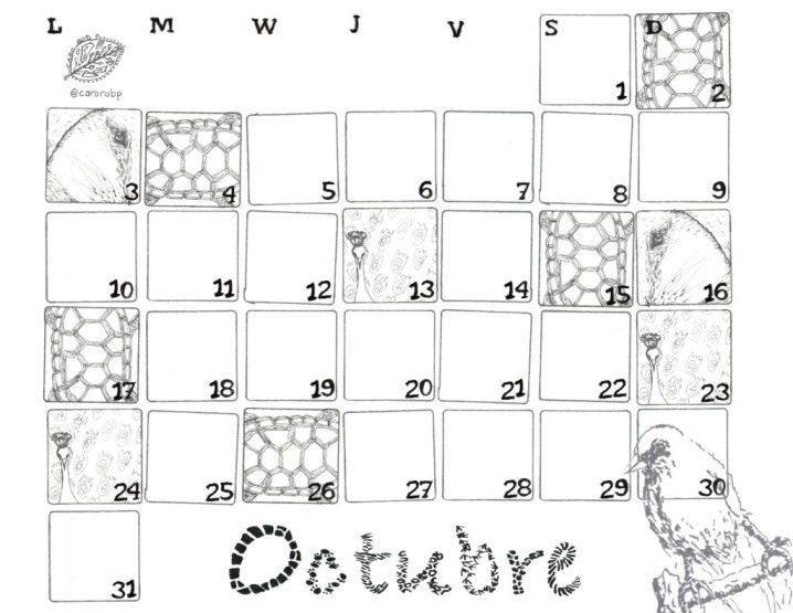 octubre-calendario-taman%cc%83o-carta