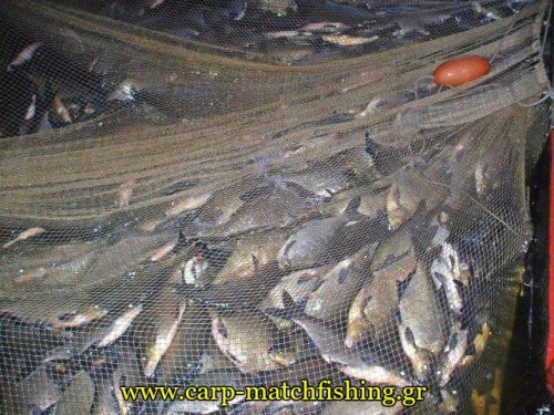 limni-kastorias-dixtya-paranomies-carpmatchfishing