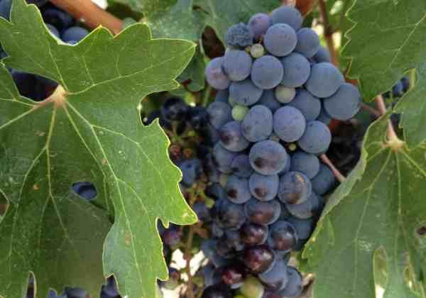 Paso Robles Wine