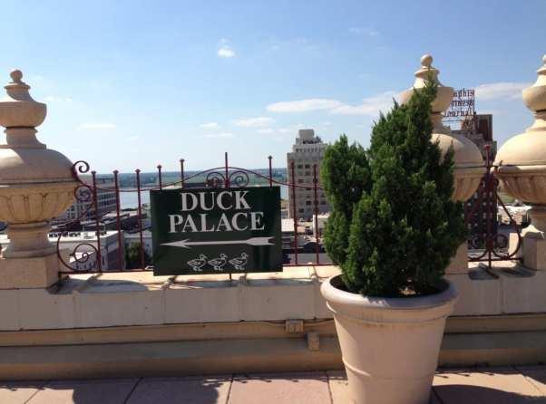 peabody hotel ducks palace