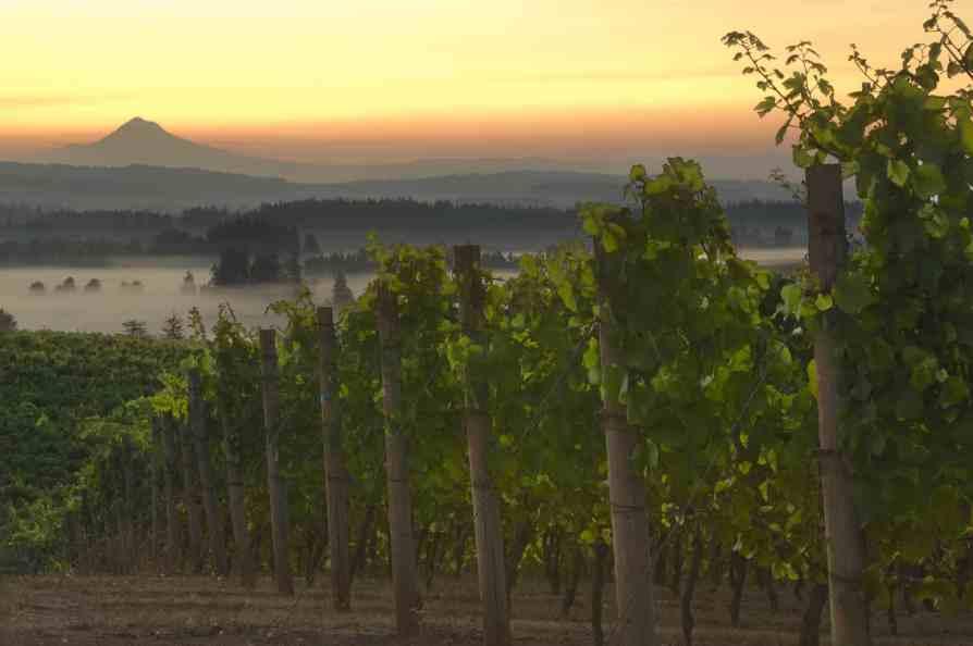 Elk Cove Vineyard Oregon wine country