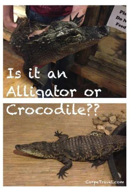 Gator Country alligator vs croc