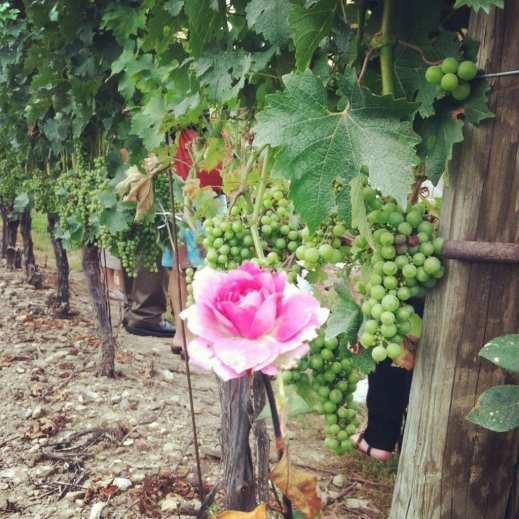 Niagara-on-the-Lake Wineries Peller Estates