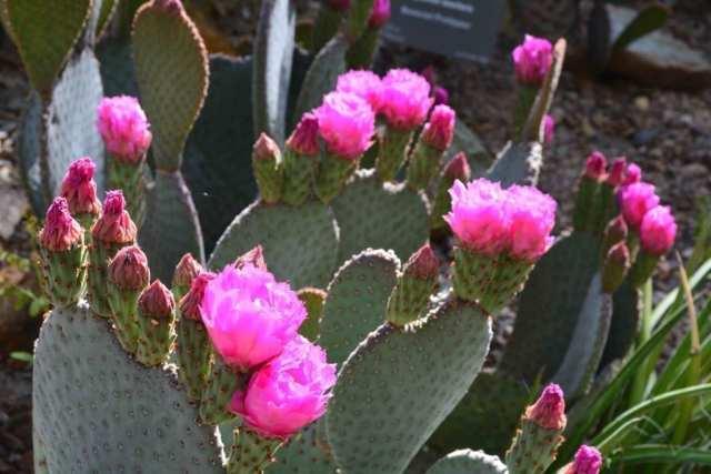 The Desert Botanic Garden in Phoenix is must see.