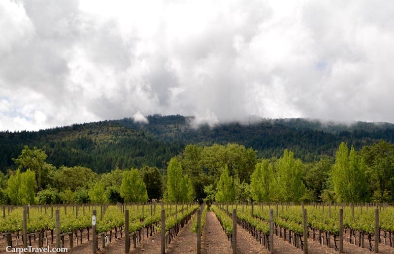 Wine Facts About Napa Valley: The Napa Valley has a dry Mediterranean climate, covering only 2 percent of the Earth's surface.