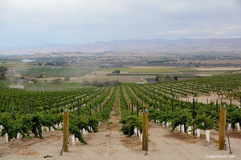 Idaho Wine region is growing as a player in the United States wine market.