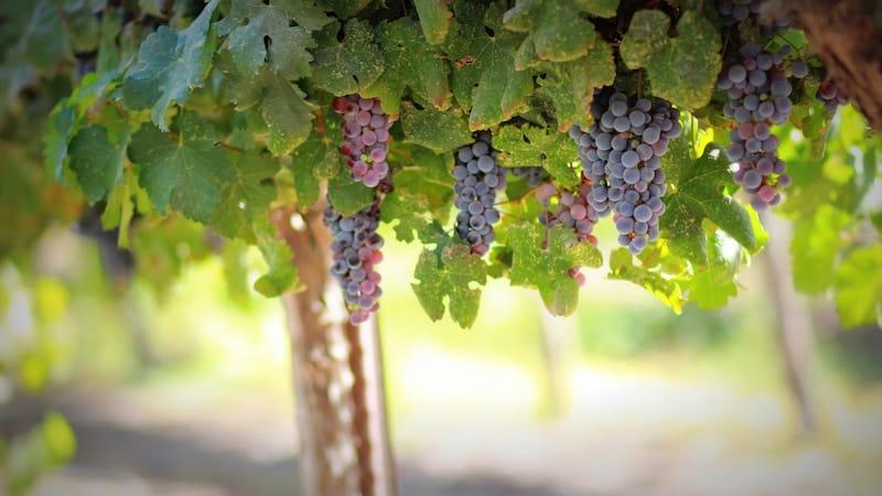 Wine Tasting in Philly: Bucks County Wine Trail