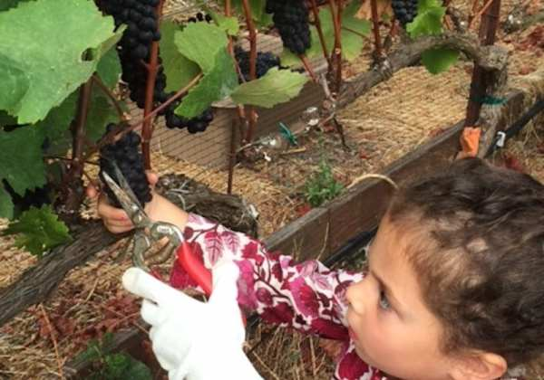 Family Friendly Wineries in California