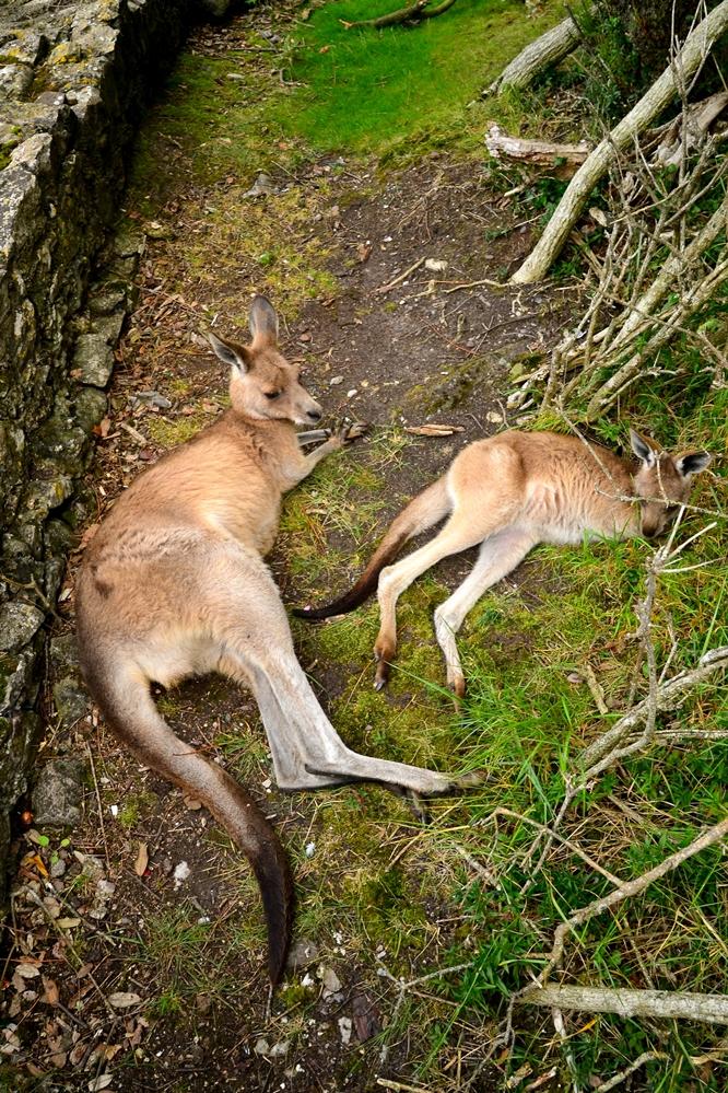 Fota Wildlife Park, Cork