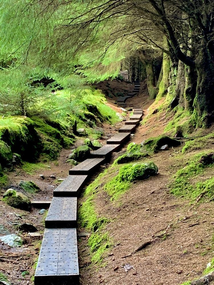 Ballinastoe Forest