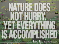 Nature does not hurry, yet everything is accomplished - Lao Tzu
