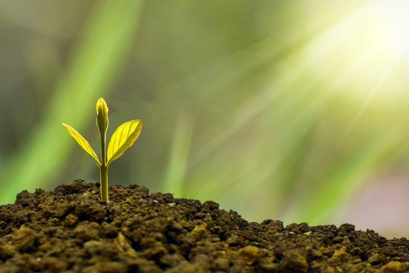 graine qui germe espoir terre paix calme zen méditation